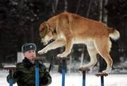 Дрессировка собак(Кинолог-зоопсихолог),  Харьков