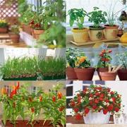 Развести сад и огород на подоконнике - очень просто!