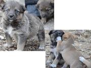 Мировые щеночки 1-го месяца ищут добрые и заботливые ручки