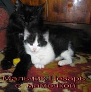 Удивительные котята (метисы Турецкой Ангоры)