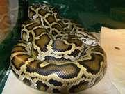 Пордам разнообразных змей