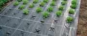 Агроволокно,  спанбонд,  защита от сорняков 50г/м2 3, 2м*10м