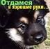 Ветеринарная клиника Харьков 067-730-57-37