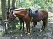 Конные прогулки в Хорошево