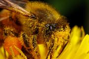 Продам 50 пчелосемей (рута) в апреле 2014 года
