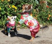 Одежда для собак Индивидуальный пошив