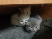 Котята ищут своих добрых хозяев