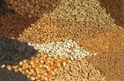 Продам пшеницу,  ячмень,  кукурузу,  жмых,  шрот