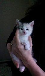 отдам красивых котят в хорошие руки !!!