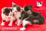 Котята от бренда