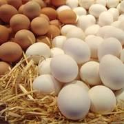 Яйцо куриное всех категорий
