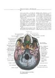 атлас анатомии Синельникова 4 тома