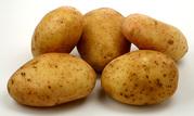 Куплю Картошку с НДС постоянно