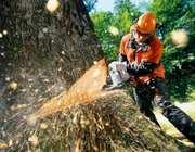 Спилим мешающие деревья,  Харьков
