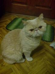 Кот приглашает на свидание своих подруг.